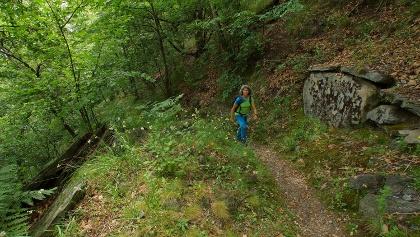 Im Kastanienwald zwischen San Pellegrino und Chironico.