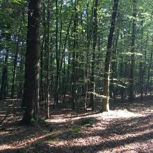 Foto von Wanderung: Wandern im Nationalpark Kellerwald-Edersee [Ringelsberg-Route] • Waldecker Land (08.09.2017 16:33:54 #2)