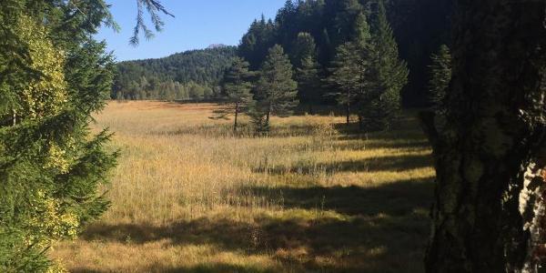 Langes Moor