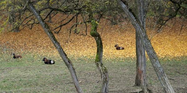 A vadaskert a Varróháznál