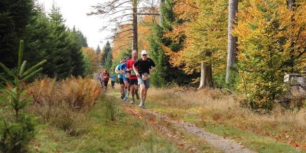 Streckenabschnitt des Rothaarsteig-Marathon