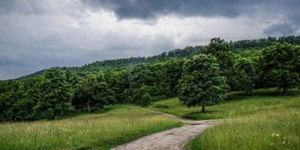 Eső előtt a Mester-réten