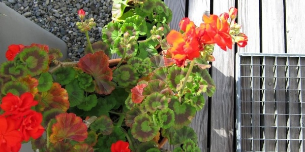 Blumen_Terrasse