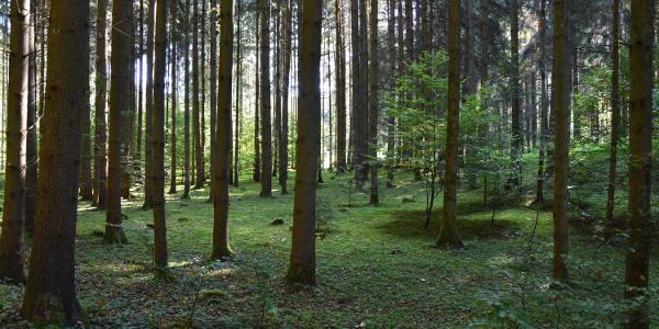 """""""Märchenwald"""" auf der Wanderroute"""