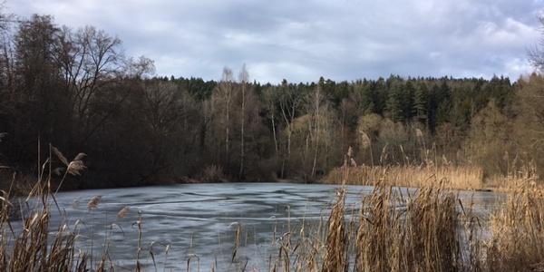 Weiher beim Kloster Kirchberg