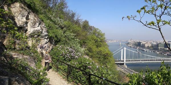 Kilátás a Gellért-hegy oldalából