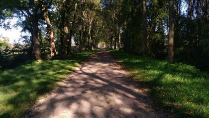Allee im Rodebach-Rodebeek