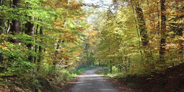 Zauberhafte Waldwege
