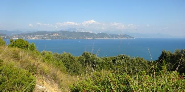 Palmaria Island