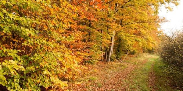 An Laubwald vorbei ...