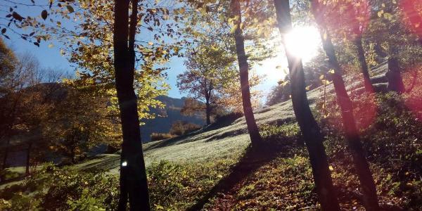 Im Wald bei Schrambach