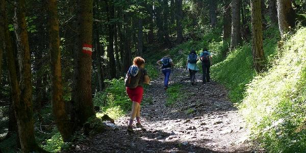 Gemütlicher Waldweg zur Grabneralm