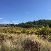 Vineyards and fields near Apt