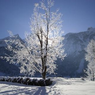 Winterliche Au