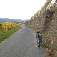 Herbst im Weingut