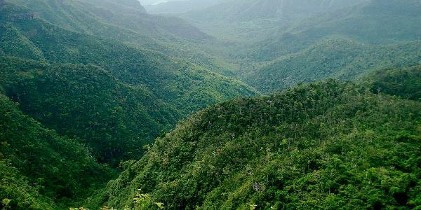 Black-River Gorges Nationalpark