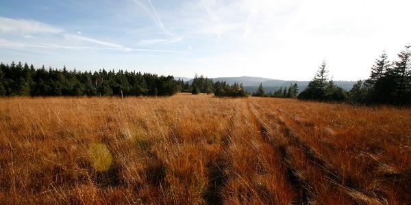 Grindenflächen am Schliffkopf