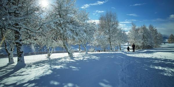 Randonnée hivernale autour du golf Ballesteros à Crans-Montana