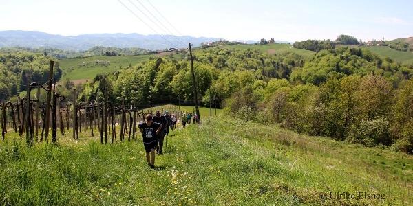 Nordic Walking Vinotour