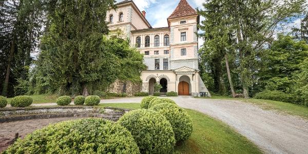 Blick Auf Schloss Greißenegg