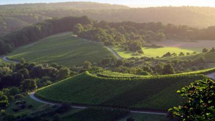 Aussicht auf die Weinberge rund um Sternenfels im Naturpark Stromberg-Heuchelberg