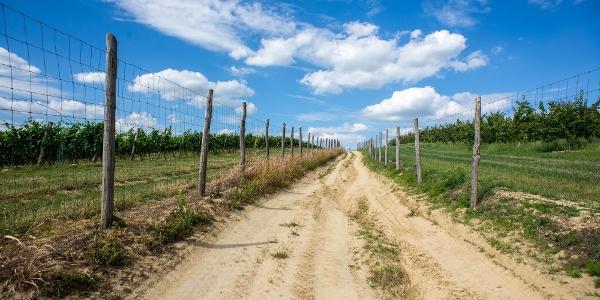 Bekerített szőlők és gyümölcsösök között haladunk Mórágy és Szálka között