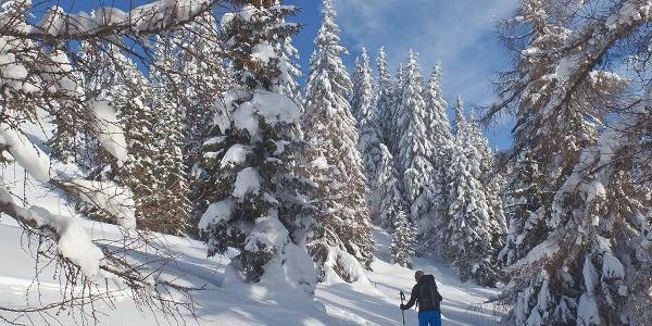 Ski tour Colle Isarco/Gossensass