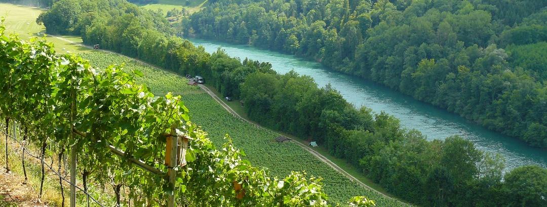 Blick von der Buchberger Eichhalde auf den Rhein