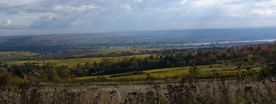 Aussicht im Rheingau
