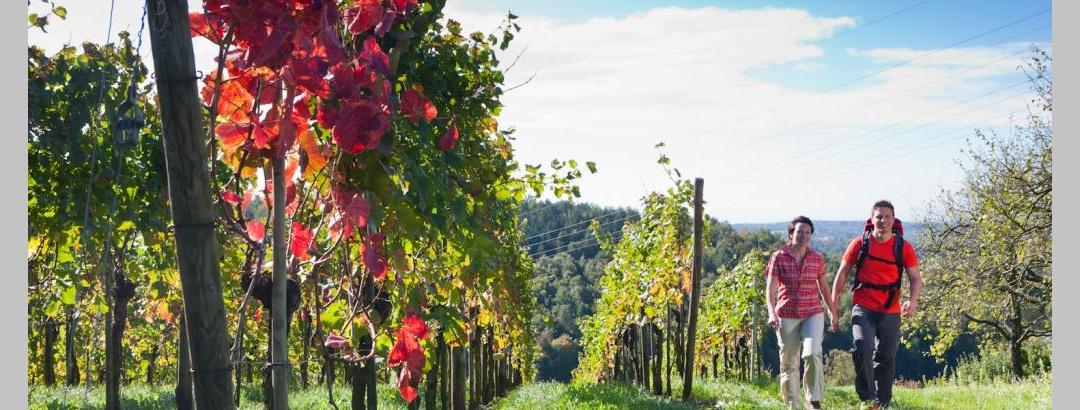 Premiumwandern durch die Weinreben