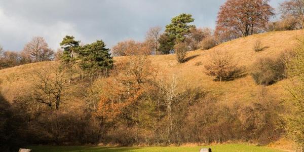 Kalkkuppen, der Hang wird im Frühjahr erblühen