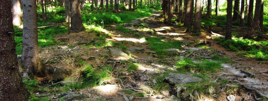 Entspannter Aufstieg zur Platte (885 m )