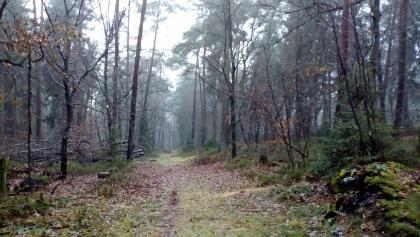 kurzer schöner Single Trail in der Höhne