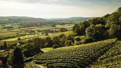 Aussicht vom Ottenberg in das Thurtal bei Weinfelden.
