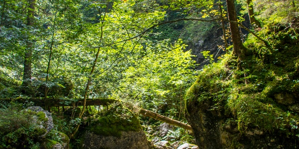 Wasser in der Reichenbachklamm