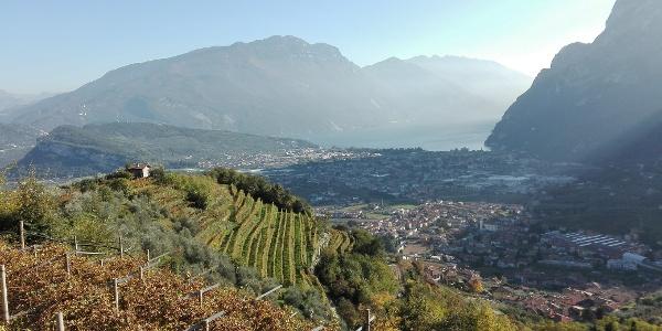 Through the vineyards to Volta di No
