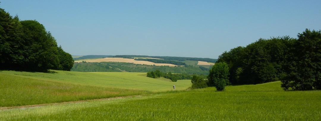 Felder bei Sachsenflur