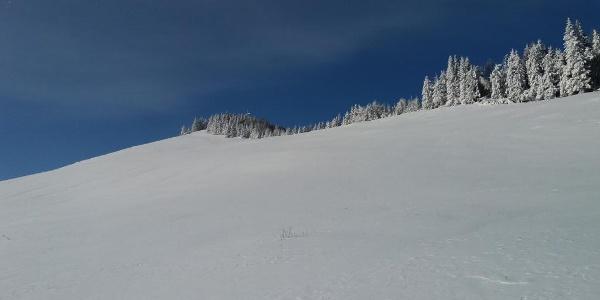 Schneeschuh-Runde am Brandkogel_verschneite Sommerweide