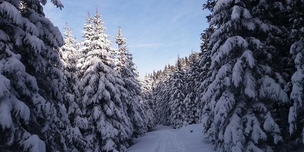 Kurze Schneeschuhrunde auf der Stubalm_Verschneiter Waldweg
