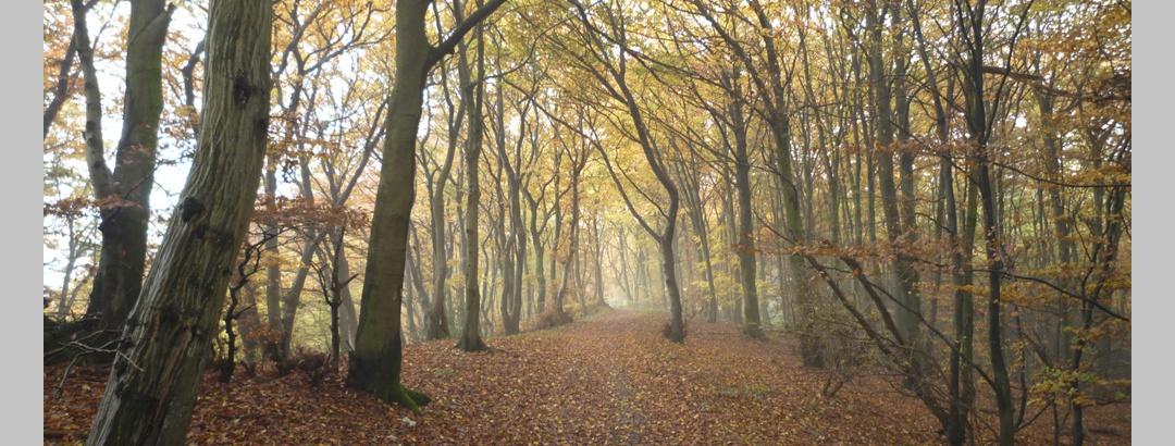 Goldener Herbst auf der Johannisegge