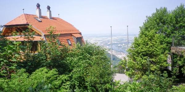 Am Königstuhl über Heidelberg