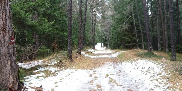 Bellissima stradina forestale che passa il bosco