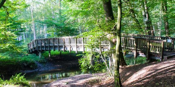 Eine Brücke über die Bille bei Witzhave