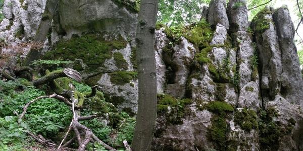 Naturschutzgebiet Klamm im Altmühltal bei Riedenburg