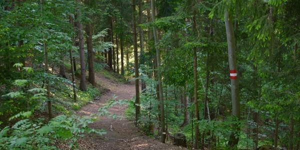 Durch Wälder, Wiesen und Weingärten