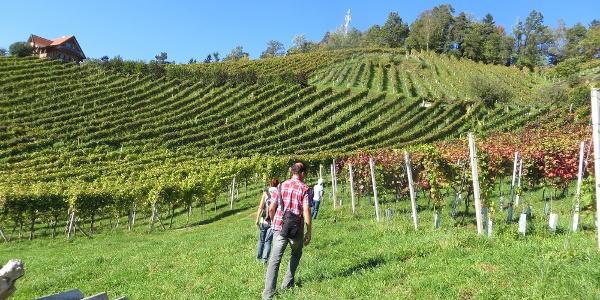 Durch Wiesen und Weingärten
