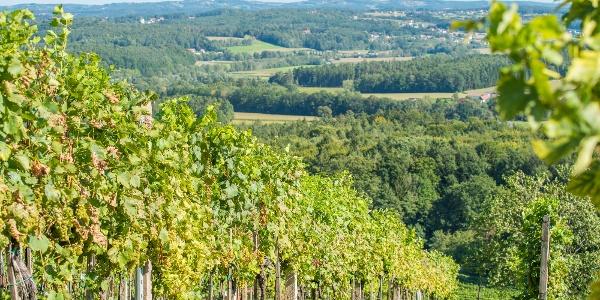 Weinlandschaft Pöllauertal