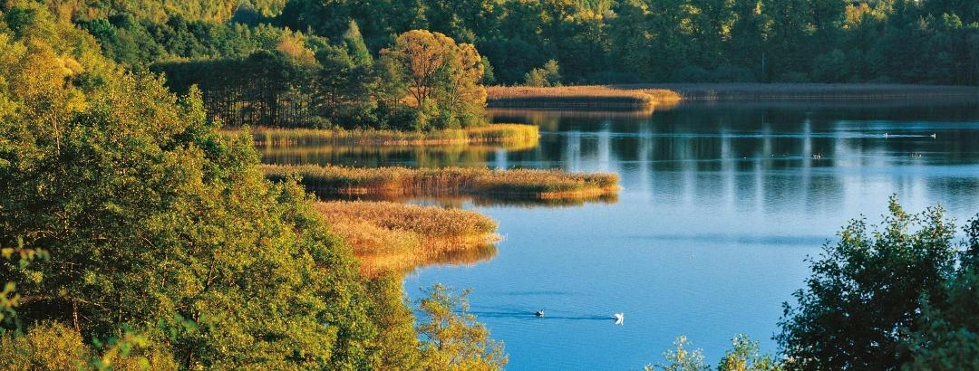 Besonders im Herbst zeigt sich der Schaalsee ganz malerisch