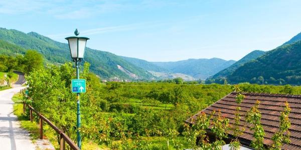 In der Wachau prägt Obstanbau das Landschaftsbild