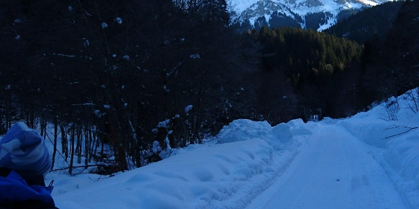 Auf der Forstrasse in den Bärengraben mit Blick auf Hohe Veitsch